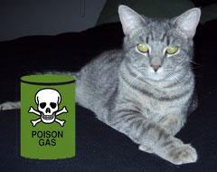 STRAI tsunami cat (interior view)